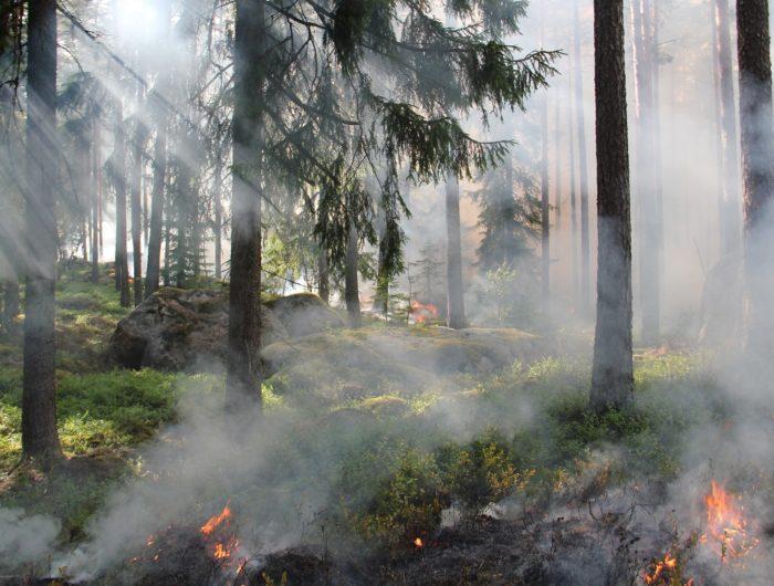 Russie: Feux de forêts et sites nucléaires: comment éviter le pire?