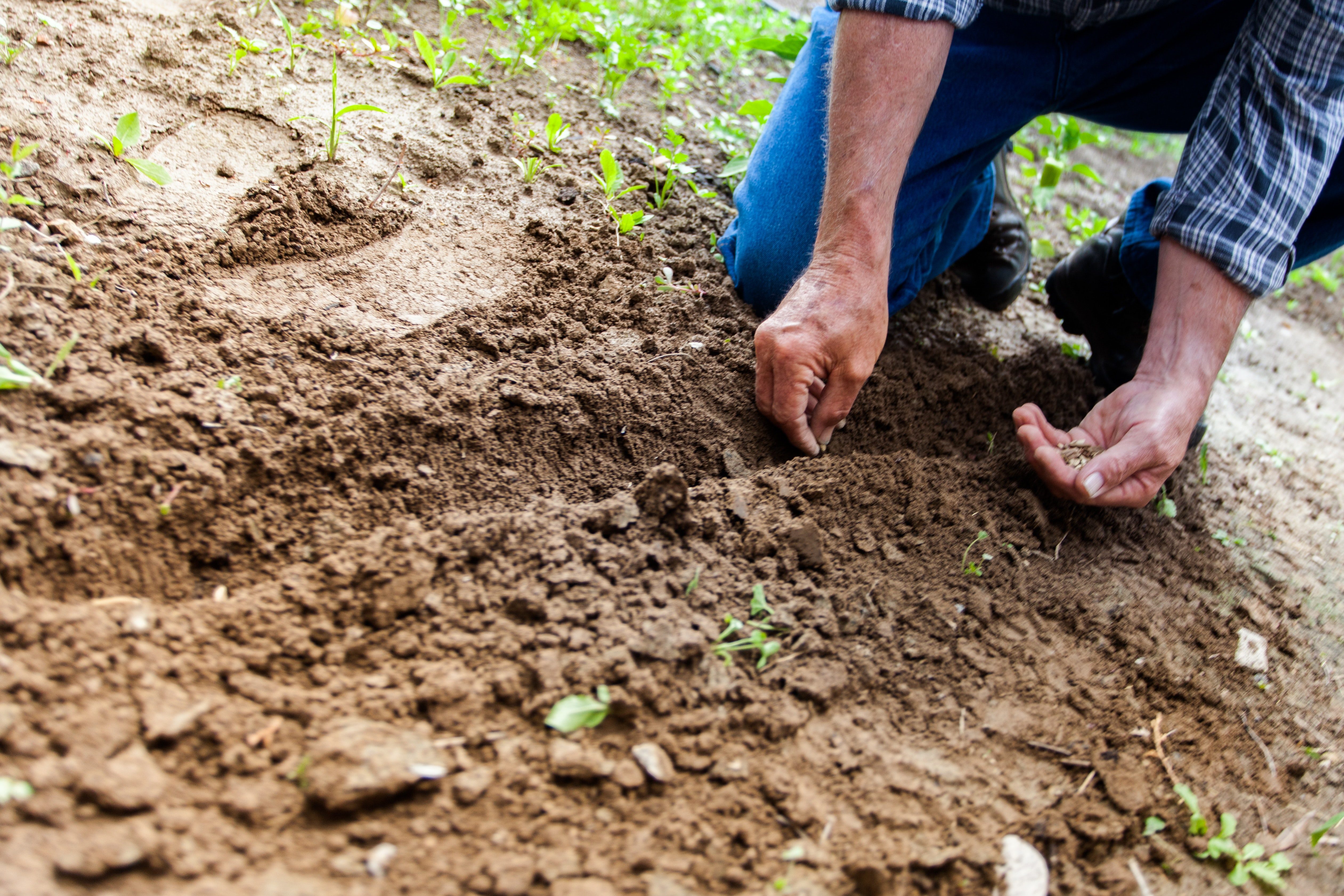 Climat, terres et agriculture: l'alerte du GIEC