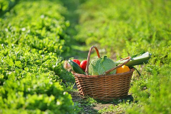Conclusion Projet Jeunesse en Action pour une Alimentation Responsable