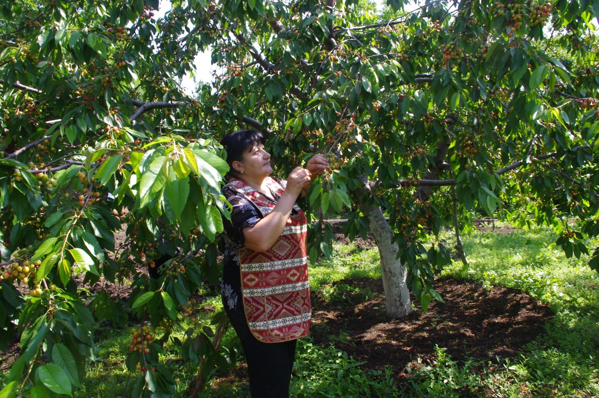 Retour sur la campagne de financement participatif pour l'acquisition d'un séchoir à fruits solaire en Arménie.