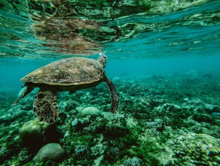 Pour protéger les coraux, Hawaï interdit certaines crèmes solaires